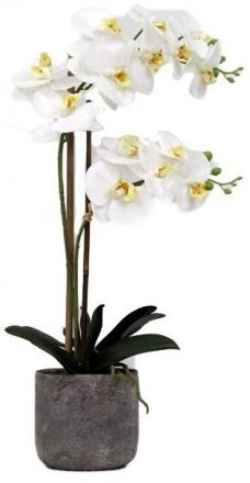 White orchid image